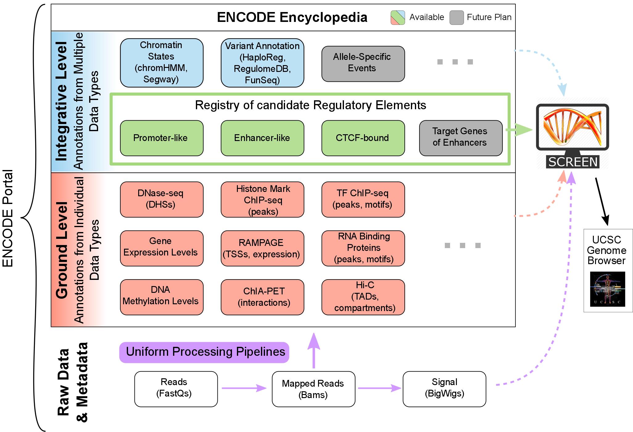 Encode Encyclopedia Version 4 Genomic Annotations Encode